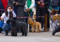 ФОТО: Се одржа изложба на расни кучиња