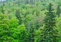 Забрана за движење низ шумите од 6 до 20 часот
